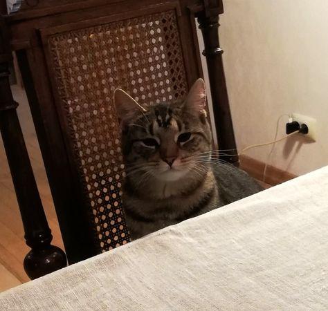 Oglądasz obrazki z tematu: Szara kotka zaginęła w Grabówce