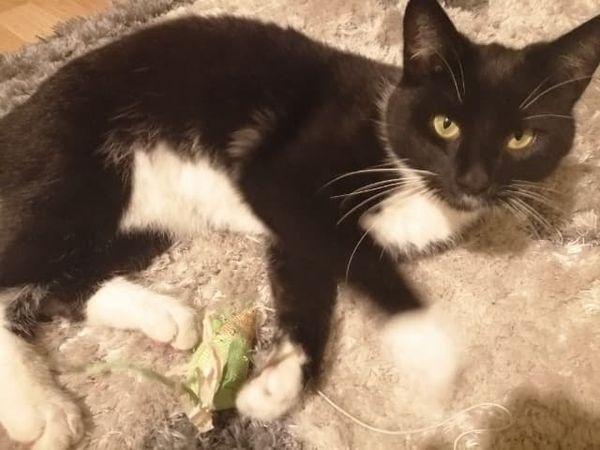 Oglądasz obrazki z tematu: CZarno biały kot błąkał się po Jarzębinowej