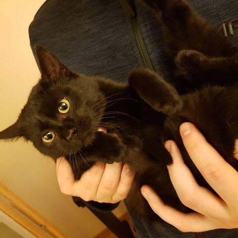 Oglądasz obrazki z tematu: Czarna kotka znaleziona na os. Piaski