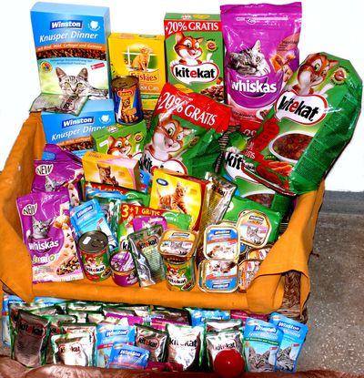 Oglądasz obrazki z tematu: Uczniowie Publicznego Gimnazjum nr 3 nakarmili głodne kotki