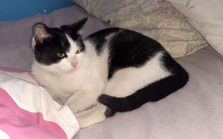 Oglądasz obrazki z tematu: Biało czarny kotek w kolorowej obroży błąkał się po ul. Sowlańskiej