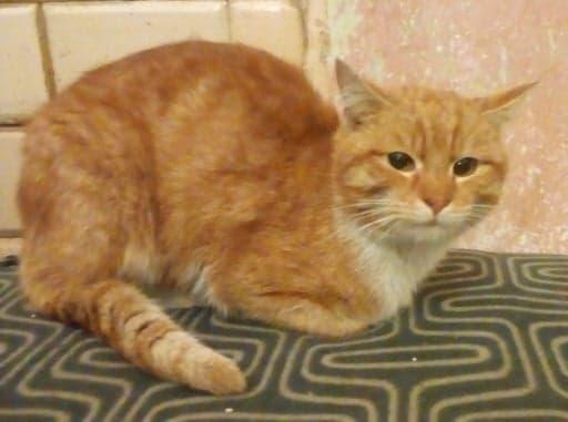 Oglądasz obrazki z tematu: Rudy oswojony kotek z ul. Naftowej wrócił do domu:)