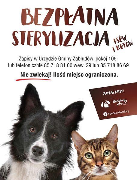 Oglądasz obrazki z tematu: Bezpłatna sterylizacja zwierząt właścicielskich