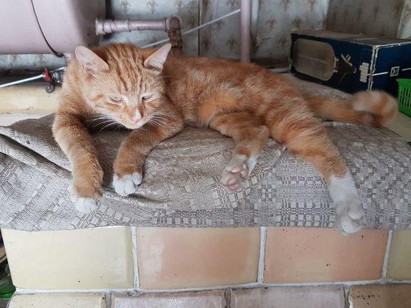 Oglądasz obrazki z tematu: Rudy kotek z Grabówki odnaleziony
