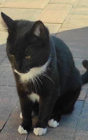 Oglądasz obrazki z tematu: Czarno biała kotka zaginęła w ok. Fabryczna/Wasilkowska