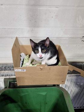 Oglądasz obrazki z tematu: Czarno biały kotek/kotka błąkał się po ul. Gen Maczka