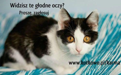 Wystawa kotów w Białymstoku